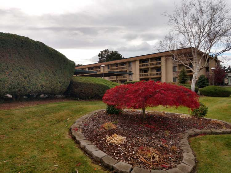 Building Grounds - Red Bush